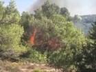 اعتقال مشتبه من عسفيا باضرام حرائق في أحراش جبل الكرمل