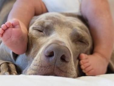 شاب: كلب صغير أنقذ حياة طفلي