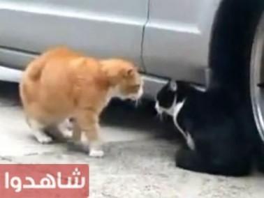 فيديو:شاهدوا طريقة القطط في المعاتبة واللوم