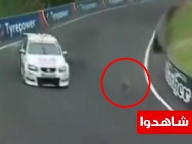 سبحان الله حتى الحيوانات تعشق سباقات السيارات !