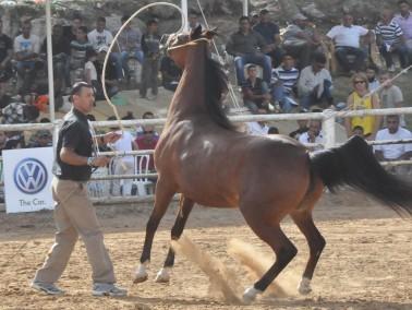 انطلاق البطولة الأكبر في البلاد للخيول العربية