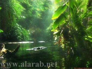 غابات الأمازون الساحرة تجسد عظمة الخالق