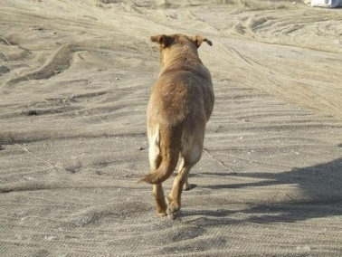 إصابة 8 اشخاص جراء عضة كلب في طبريا
