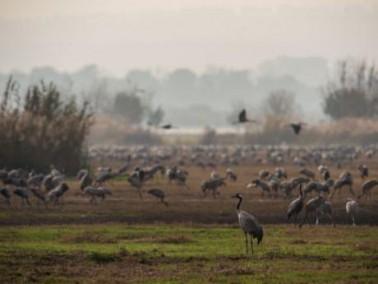 مجمعة صور رائعة لهجرة الطيور فوق سهل الحولة