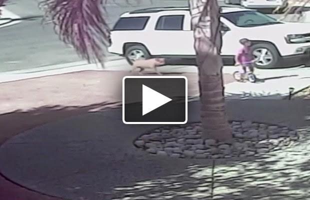 قطة تنقذ طفلا من هجوم كلب..يستحق المشاهدة