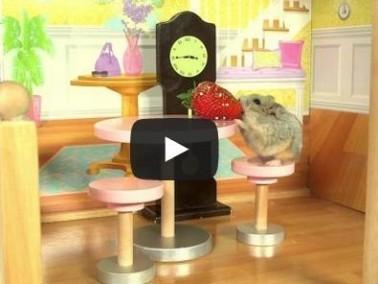 بالفيديو: هامستر صغير يعيش في بيته الخاص!