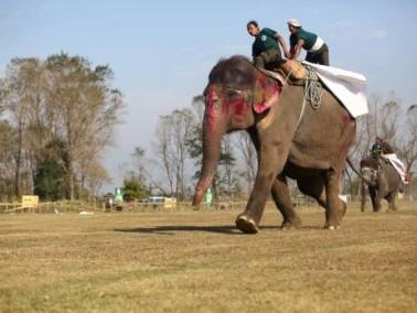 صور: سباق الحيوانات والفيلة في نيبال