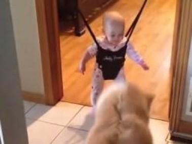 فيديو طريف لكلب يقلّد طفلًا