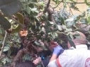 حيفا: إصابة رجل وزوجته بجراح بعد سقوط شجرة عليهما في ساحة المنزل