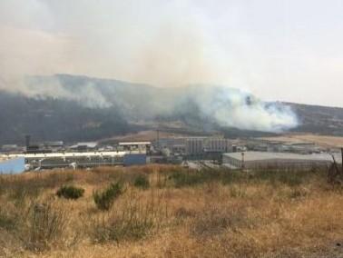 ظاهر: الحريق في أحراش نين سببه تقليم الأشجار وحرقها
