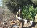 تمديد إعتقال رجل وابنه بعد الكشف عن حقل للمخدرات في الجليل الغربي