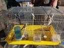 طوبا الزنغرية: اعتقال مشتبه بعد ضبط عصافير برية محمية وأدوات صيد