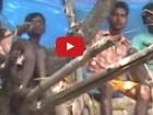 فيديو: عائلة تعيش حياة طرزان