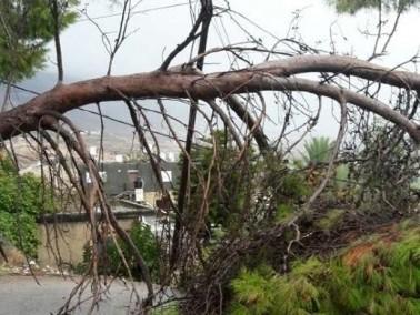 نحف: سقوط شجرة بالقرب من مدرسة ابن سينا الثانوية
