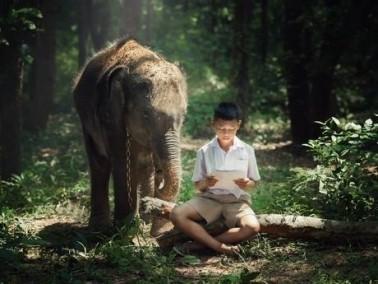 باقة معلومات عن الحيوانات للأطفال