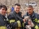 اندلاع حريق في شقة سكنية في نيشر وانقاذ كلب دون اصابات
