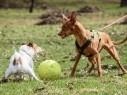 حيفا: السجن الفعلي وغرامة مالية لرجل قام كلبه بعض كلبة آخرى