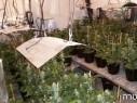 نهاريا: اعتقال مشتبه بعد ضبط مخدرات بقيمة نصف مليون شاقل