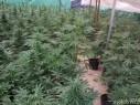 الجنوب: الشرطة تضبط دفيئة مخدرات تُقدّر ثمنها بـ8 ملايين شاقل وإعتقال مشتبه