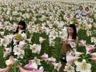 صور من حديقة الزنابق الصينية