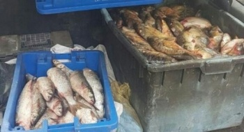 الشرطة: لائحة اتّهام ضد أب وابنه من جسر الزرقاء بسرقة 130 كلغم سمك