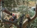 الجيش: عمليّات أمنيّة واسعة في منطقة المحور الالتفافي لقرية حوسان
