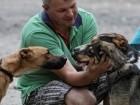 أوكرانيا: مساعدة الكلاب المتشردة..صور