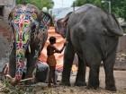 الهند: مهرجان الرسم على الفيلة