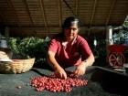 هكذا يحصدون بذور البن في بوليفيا
