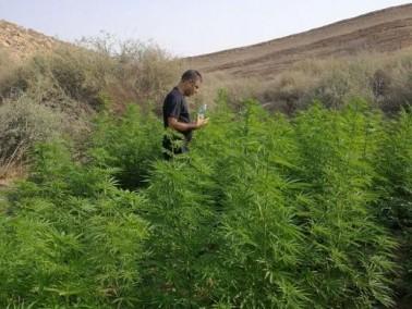 الحدود الجنوبية والشرطة تضبط 4 دفيئات مخدرات