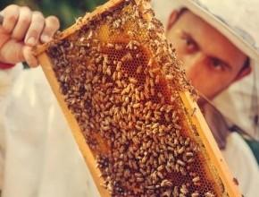 دراسة: 75% من عسل النحل به مبيد حشري