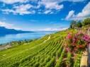 سويسرا.. الوجهة الأوروبية الخضراء المحببة للجميع