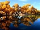 منغوليا الصينية ترتدي اللون الأصفر