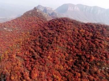 اللون الأحمر يطغى على جبل جيغوان الصيني