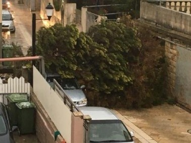 سقوط شجرة في عسفيا