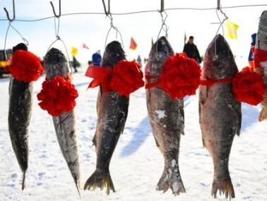 موسم الصيد الشتوي في منغوليا