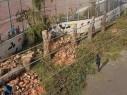 أم الفحم: استياء بعد قيام البلدية بقص أشجار في عدة أحياء