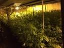 منطقة الضفة: ضبط معمل لتنمية مخدرات المريخوانا واعتقال مشتبه