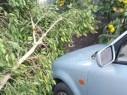 سقوط اشجار في باقة الغربية بسبب العاصفة والرياح الشديدة
