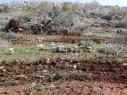 عين ماهل: تجريف أراض واقتلاع أشجار الزيتون وسط استياء عارم
