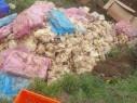 العثور على 3 أطنان من اللحوم والدواجن الفاسدة واعتقال صاحب ملحمة في بقعاثا