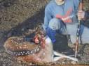 اعتقال 19 مشتبهًا من حرفيش والجش ويركا وغيرها بصيد وتجارة حيوانات برية
