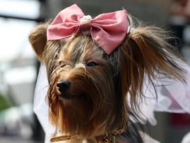لقاء مع الكلاب بمناسبة عيد العشاق في الفلبين