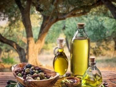 معلومات سريعة عن شجرة الزيتون
