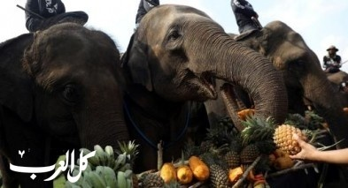 الفيلة نجوم بطولة البولو الملكية