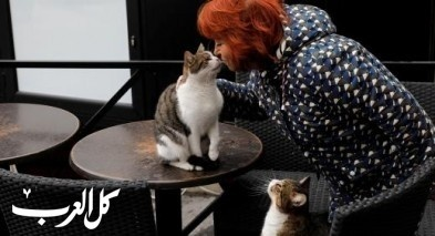 الصين: افتتاح مقهى للقطط