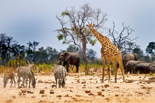 استمتعوا برحلة لا تُنسى إلى زيمبابوي