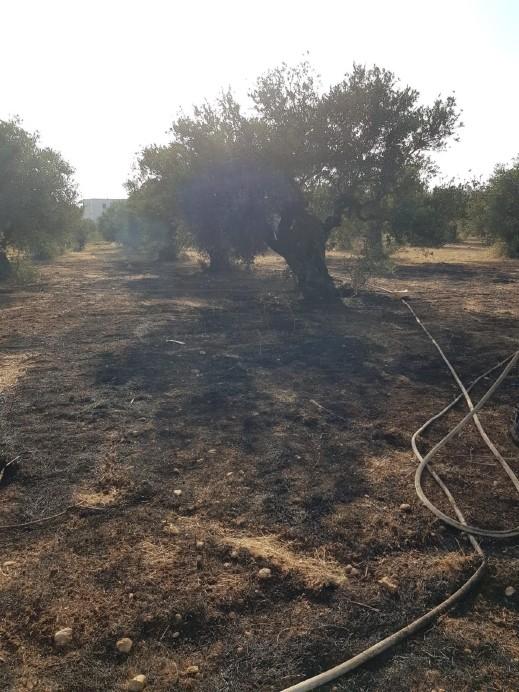 المكر: النيران تلتهم أشجارا في كرم زيتون