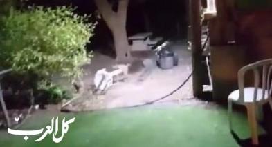 منتجع الحمة: إبن آوى يهاجم موقع التخييم ويعض اربعة