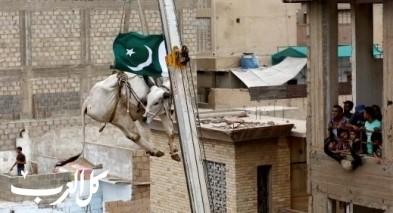 باكستاني ينزل أضاحي العيد برافعة